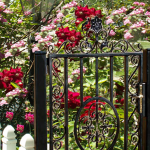 Garden Gate at the Rose Zone